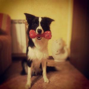 Achille cane di Veronica Piovan Mantova