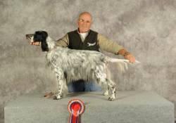 Arca della Bassana: cane setter inglese