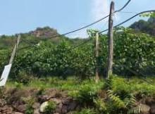 Vini cantina Thurnhof Aslago Bolzano