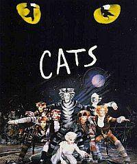 Musical Cats a Mantova