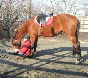 Corso di etologia applicata: comunicare con il proprio cavallo