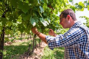 Davide Vignato viticoltore