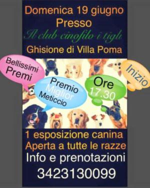 Esposizione Canina Club Cinofilo I Tigli Villa Poma MN 2016