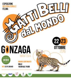 Gatti Belli dal Mondo 2016 Gonzaga Mantova