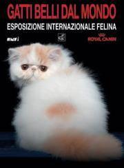 Gatti Belli dal Mondo a Mantova