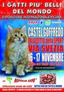 Mostra Gatti Più Belli del Mondo 2013 Castel Goffredo (Mantova)