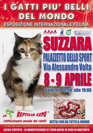 Mostra gatti e rettili a Suzzara (Mantova) 2017