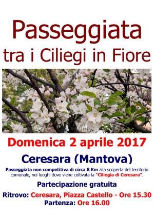 Passeggiata ciliegi in fiore Ceresara Mantova 2017