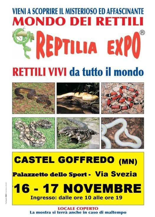Reptilia Expo 2013 Castel Goffredo (Mantova)
