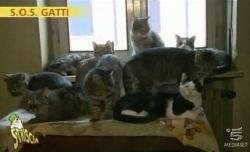 SOS Gatti: Video Striscia La Notizia puntata 02/01/2012