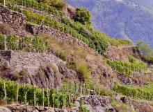 Terrazzamento Valtellina Vini