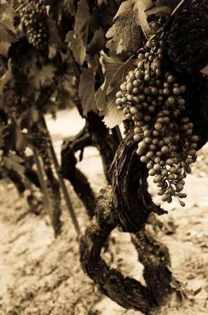 vini delle sabbie
